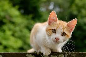 Mơ thấy mèo trong kết quả xổ số miền bắc
