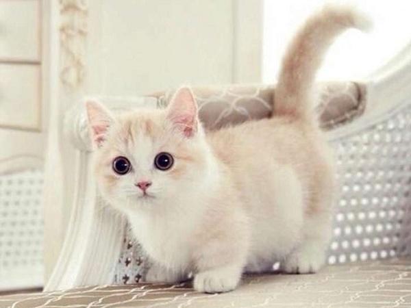 Mơ thấy mèo cụt đuôi là điềm lành hay dữ, đánh con lô đề nào?