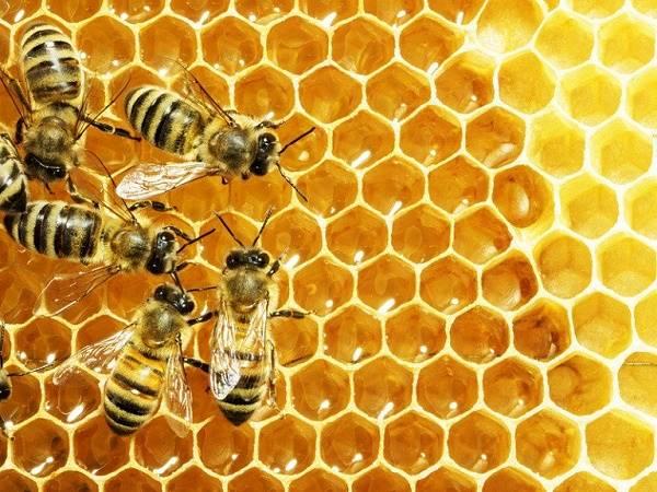Nằm mơ thấy ong là điềm gì, đánh con lô đề nào dễ trúng?