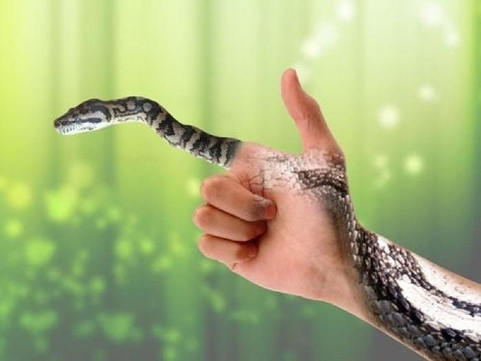 Chiêm bao thấy rắn cắn báo hiệu điều gì